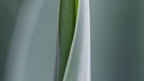 homewebconz100domainsbbsmartprojects.nlpublic_htmlbns-crispwp-contentuploads202008Sfeerbeeld-groen.jpg